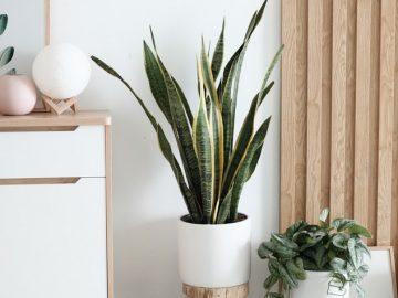 sep3 360x270 - Skønne plastik træer til indretningen