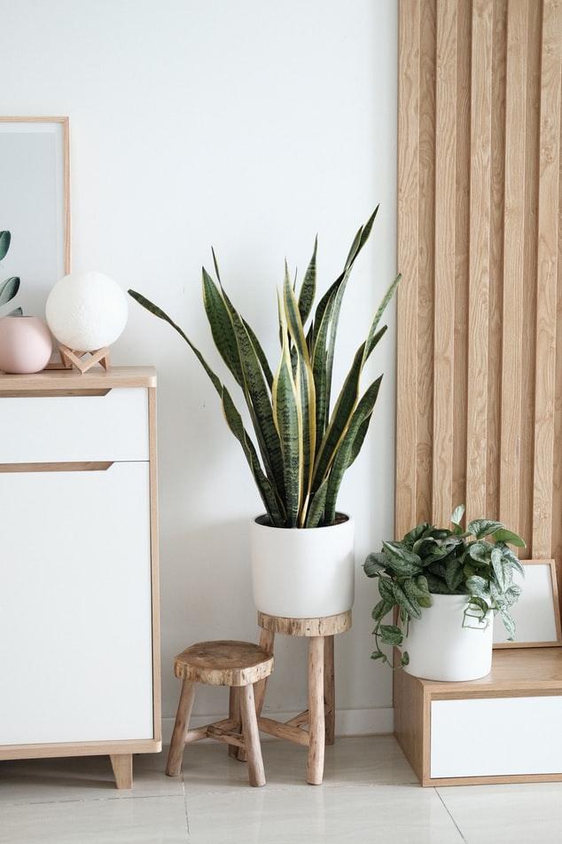 sep3 - Skønne plastik træer til indretningen