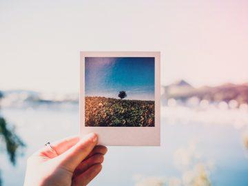 person holding photo of single tree at daytime 1252983 360x270 - Gem de dyrebare minder i en fotobog