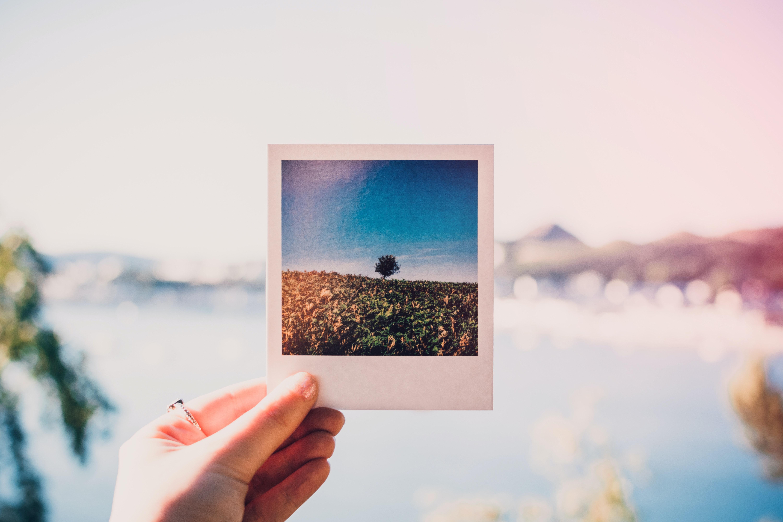 person holding photo of single tree at daytime 1252983 - Gem de dyrebare minder i en fotobog