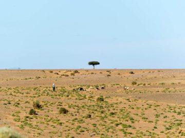 jumpstory download20200629 092624 360x270 - Oplev den storslåede natur helt tæt på i Afrika