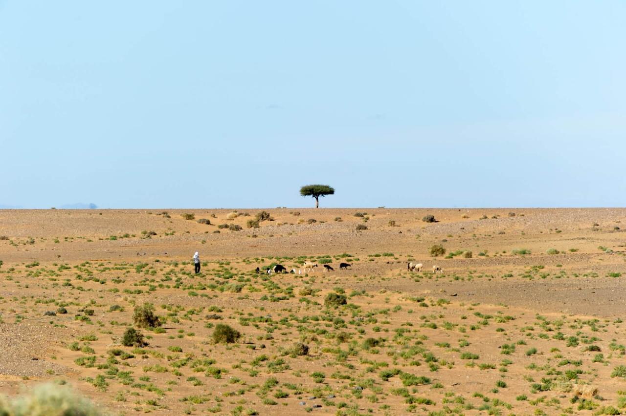 jumpstory download20200629 092624 - Oplev den storslåede natur helt tæt på i Afrika